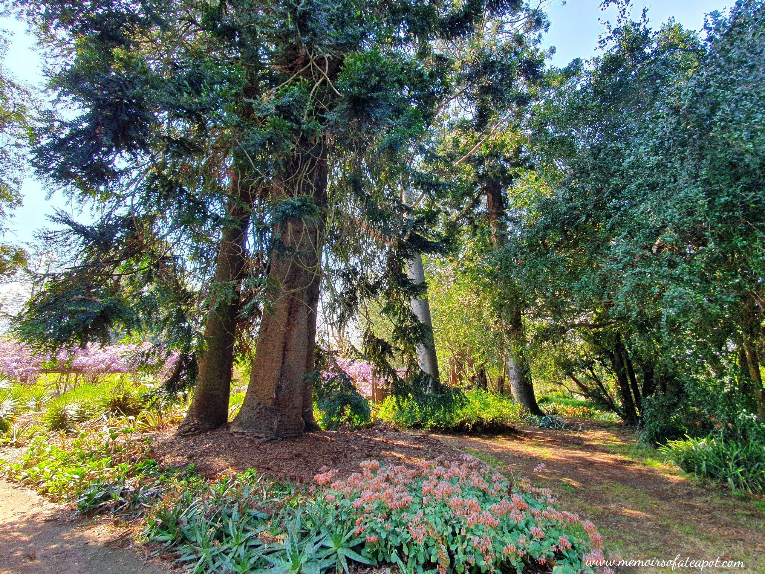 Camden Park Gardens